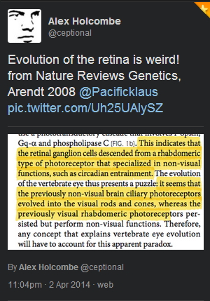 Holcombe - retina evolution